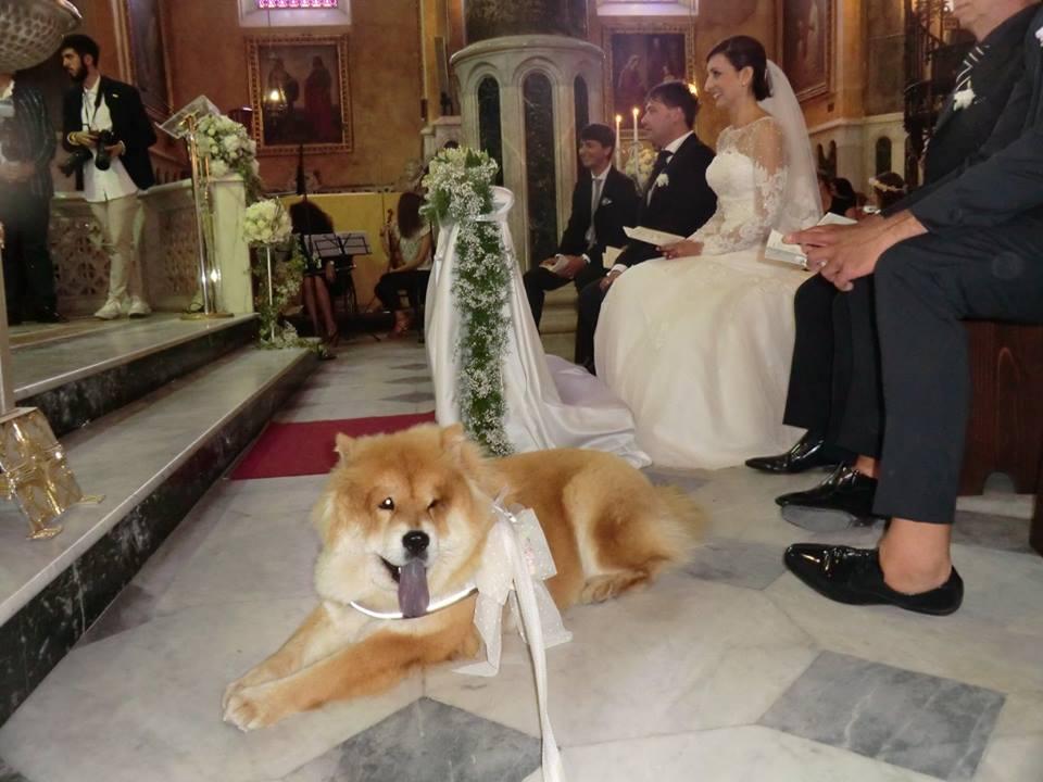 cover-Pet Service Corato - Wedding Dog Sitting