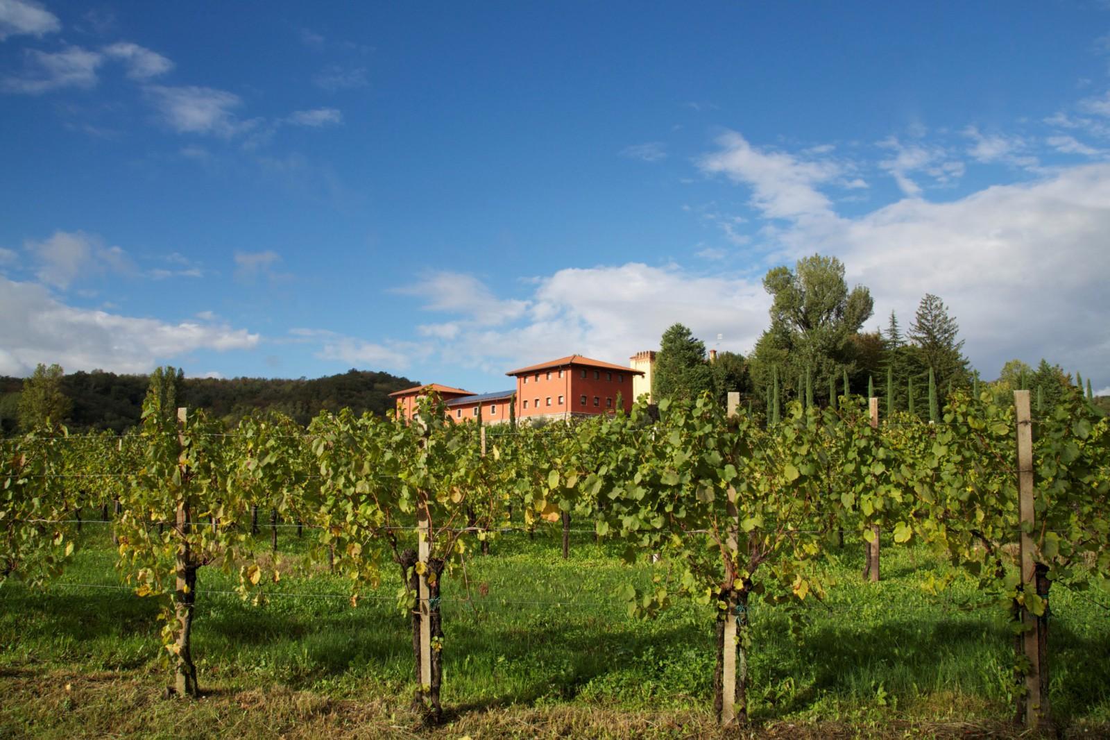 cover-Azienda Agricola Il Roncal