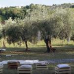 cerimonia oliveto 2